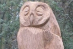 The owl of the woodland!     Orienteering at Bulwell Hall Park.
