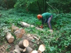 Managing our woodlands