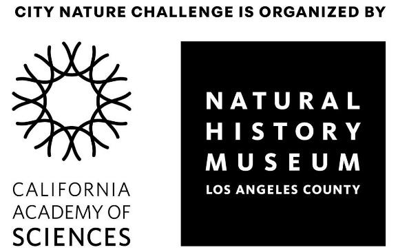 The City Nature Challenge is an international, annual event!