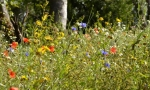Wildflower meadow © Si Griffiths