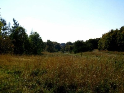 Sandy Banks - one of three new Local Nature Reserves in the city! (thanks to Keren Young for the photo)